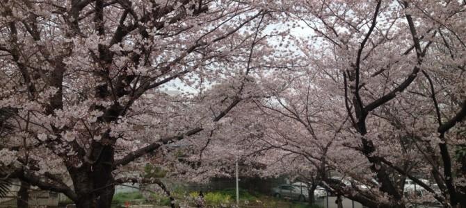 しばらく日本にいます!